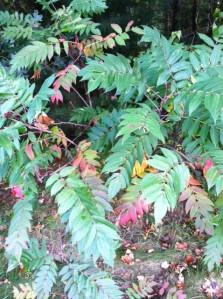 leaves1